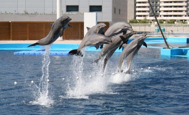 Депутатският лобизъм не пожали и животните от варненския делфинариум