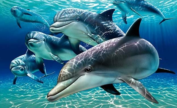 Учени откриха още доказателства, които подкрепят твърдението, че делфините се