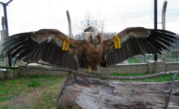 МОСВ поиска от МВР да разследва отравянето на лешоядите в Кресна