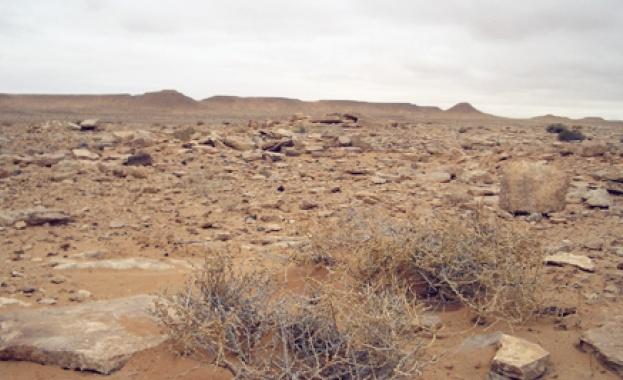 ООН: 70% от непокритите с ледници почви се превръщат в пустиня