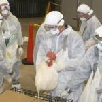 Близо половин милион птици у нас са заразени с птичи грип