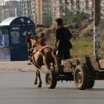 Искат пълна забрана за каруци в София