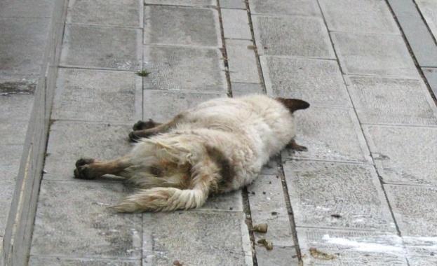 След поредицата от случаи на отровени кучета и котки по