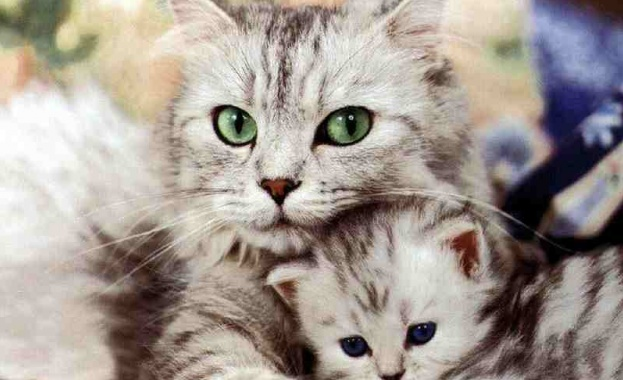 Американец ще лежи 16 години за убийство на 21 котки