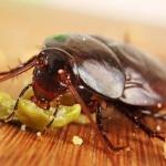 И такива услуги се предлагат: Да кръстиш хлебарка на бившето гадже