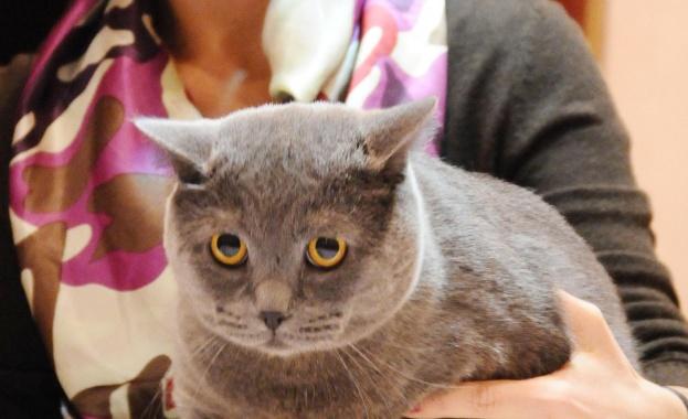 Учени от Дания: Котките могат да ни заразят с шизофрения