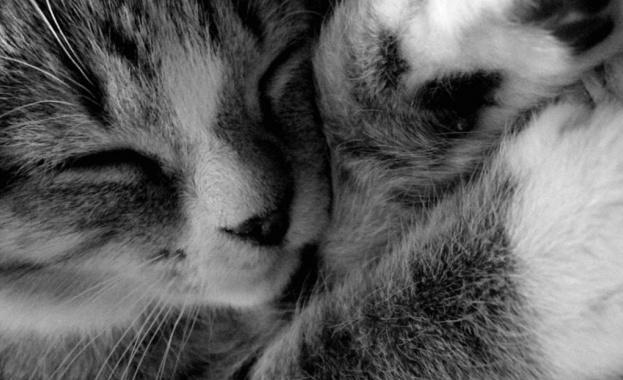 Клиника търси професионалист в гушкането на котки за 22 хил. паунда годишно