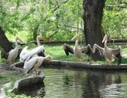 Общи туристически оферти предлагат на природолюбителите страните от Дунавския регион