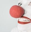 Навикът във всичко да се търси смешното е ...