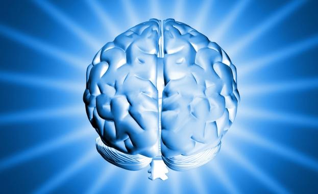 Британски учени твърдят, че уголемяването на човешкия мозък е резултат