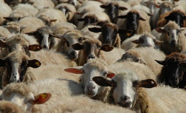 Повечето животновъди от боляровското село Воден отказаха да вземат обезщетенията
