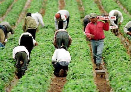 Нови правила за българските сезонни работници на Острова след Брекзит