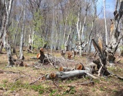 Роми нападнаха горски инспектори в Самоков