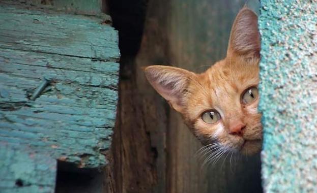 Холандски фотограф, снимал бездомни кучета и котки в София, подреди изложба в Градската градина