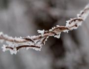 Лед и студ сковаха Съединените щати и Европа