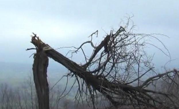 Мощни бури в североизточната част на САЩ