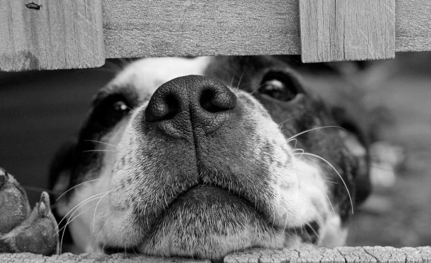 По-добре да си куче в мирно време, отколкото човек във