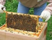 Пчеларите ще получат компенсаторни плащания по ПРСР