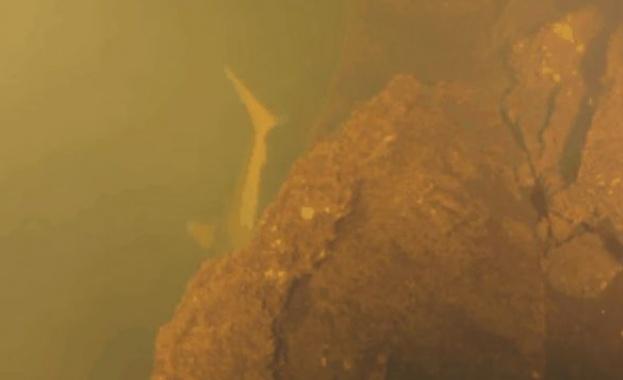 Океанологи нашли живых акул в кратере действующего подводного вулкана
