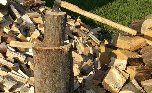 Незаконна сеч с участието на лесовъд в Сливенско