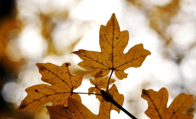 Есента напомня за себе си