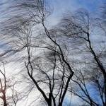 Екипи на дирекция Аварийна-помощ и превенция реагират на сигнали във връзка със силния вятър