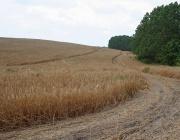 ЕК настоява България, Унгария, Латвия, Литва и Словакия да се съобразяват с правилата на ЕС относно придобиването на земеделска земя