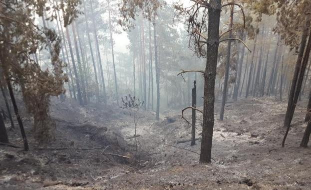 Овладян е пожарът в землището на село Невестино