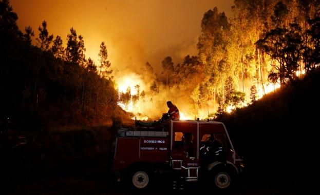 Горските пожари в Португалия, които отнеха живота на повече от