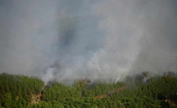 Овладян е пожарът в гората край село Стара Кресна. Това