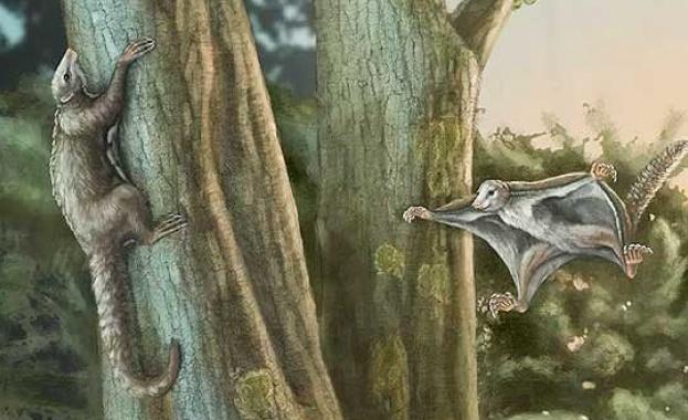 Предците на бозайниците са летели сред динозаврите