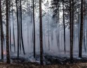Пожарните служби готови за пожароопасния сезон