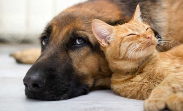 Кучетата са по-умни от котките