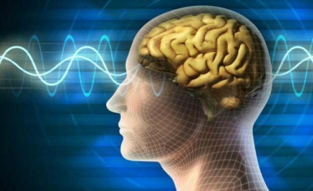 Човешкият мозък притежавал скенер, който функционира като wi-fi