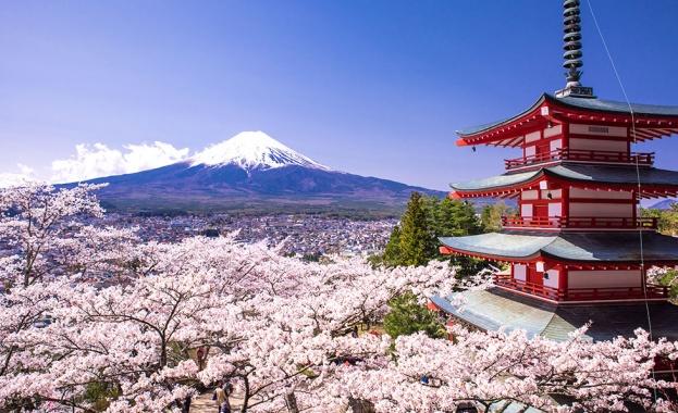Настъпва черешовия фронт в Япония