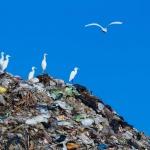 """Световния ден на Земята – 22 април отбелязваме под надслов """"Свят без замърсяване с пластмаси"""""""