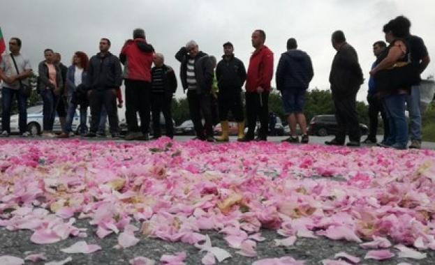 Празникът на розата в Стрелча днес няма да се състои.