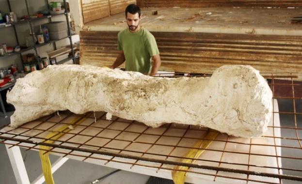 Международна археологическа експедиция е намерила в китайската провинция Шандун вкаменелости