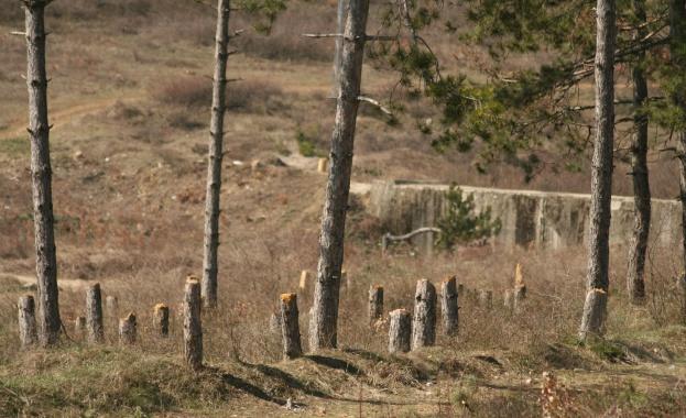 Зачестяват случаите на незаконна сеч в област Добрич заради брането
