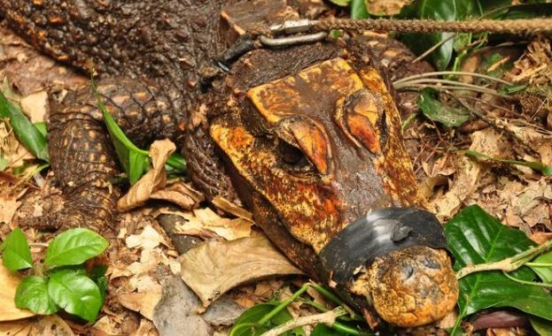 В Габон - страна, известна с геоложкото си разнообразие и