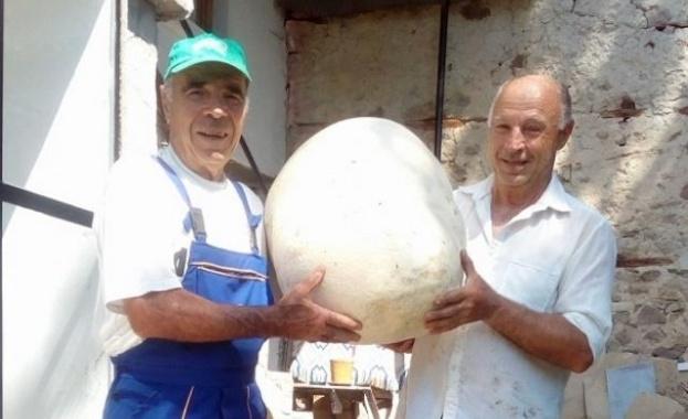 Пчелари от чепеларското село Орехово, намериха гъба, достойна за рекордите