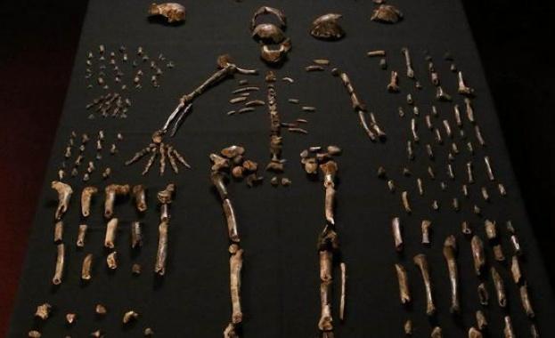 Древни оръдия на труда на рекордна възраст са били открити