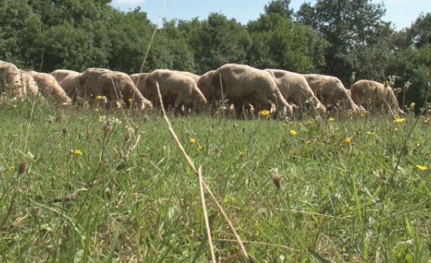Овцевъди и козевъди на национален протест днес на главния път