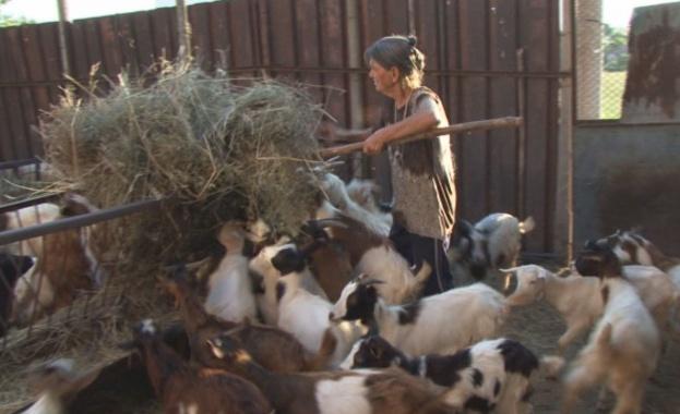 Избиха и стадото на баба Дора (обновена)