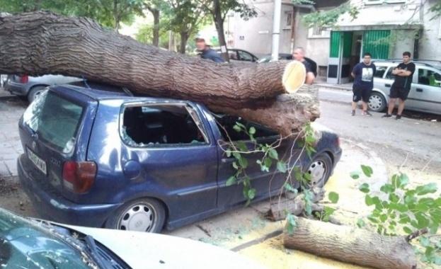 """Дърво падна и премаза няколко автомобила в пловдивския кв. """"Христо"""