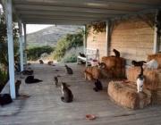 Интересна обява за работа: Да се грижиш за 55 котки на гръцки остров?