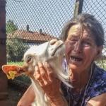 Избитите животни в Странджа: Убийство без акредитация