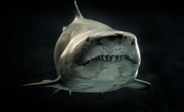 Млад мъж загина след атака на акула край брега на щата Масачузетс