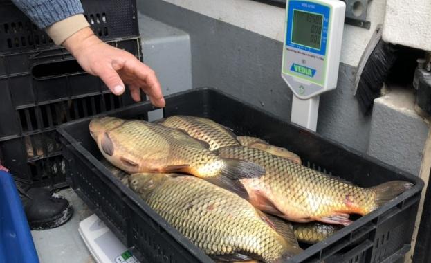Над 440 проверки преди Никулден направи агенцията по рибарство, иззета е 7 т риба от началото на годината