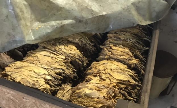 Над 1,3 млн. лв. са изплатени към момента на тютюнопроизводители